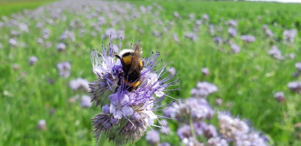 Zelf de biodiversiteit meten op je bedrijf? Doe mee!